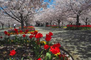 花のオアシス(長谷川)