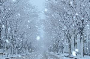 雪の日(青木)