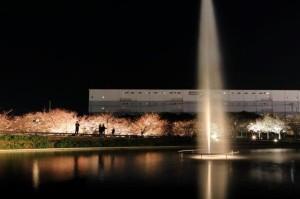 入選10桜と噴水の共演鈴木幸彦