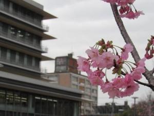 入選2花曇りの新旧庁舎細谷雅男