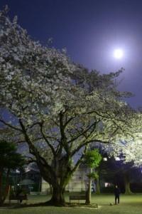 _034PQR_3543.桜と満月
